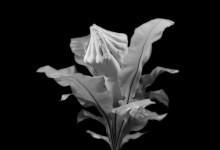 Plantas Carnívoras - Fotografias b/n 35x35 cms
